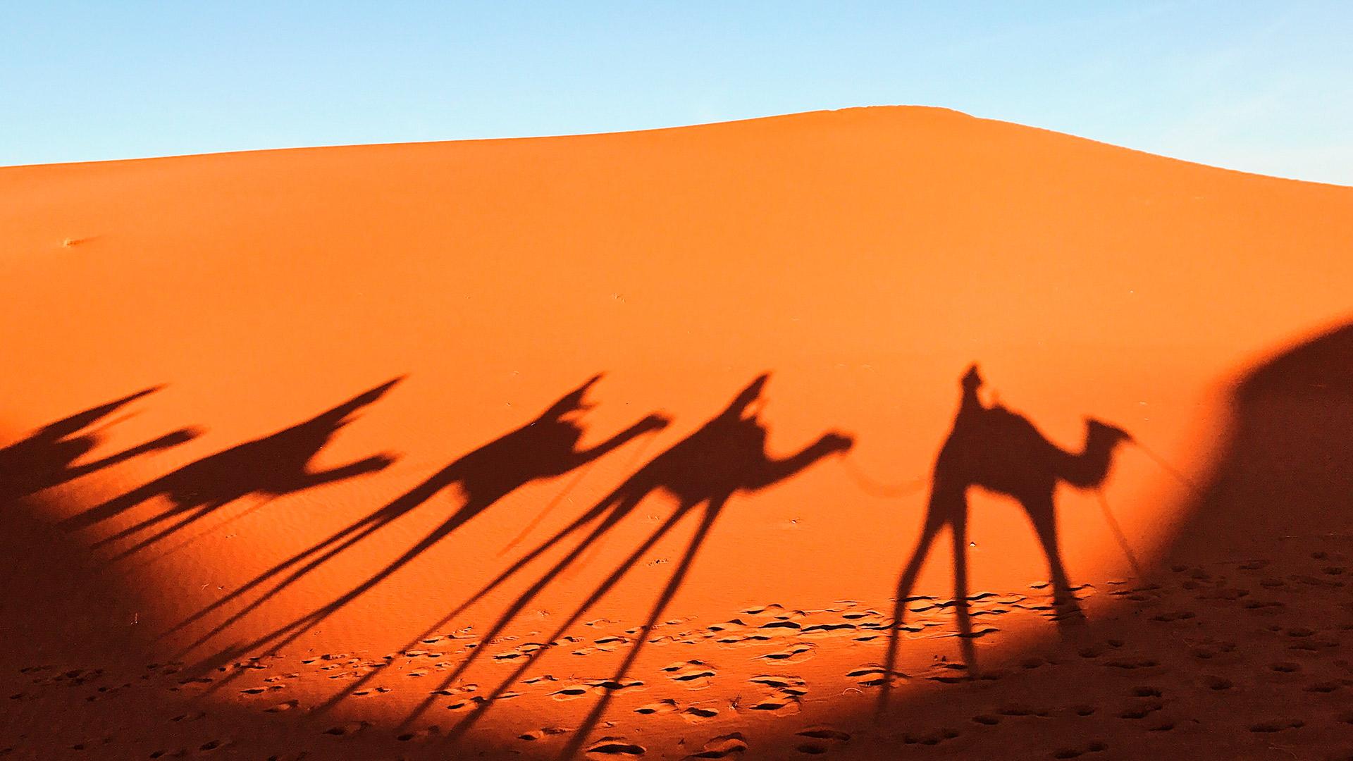 La vida en el Sáhara hero asset
