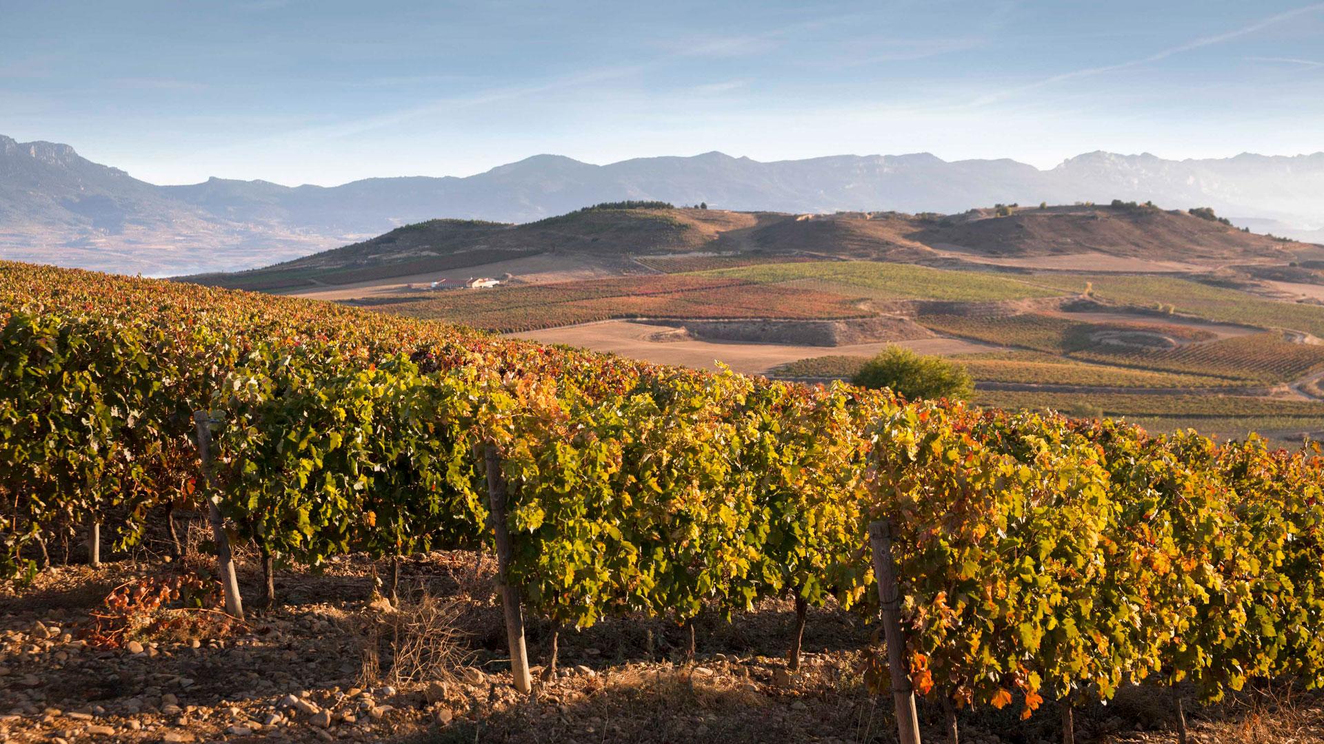 Imagen de vino Beronia